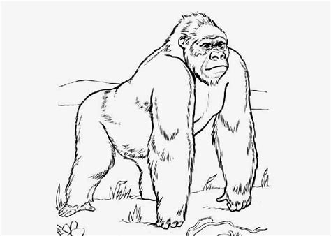 gorilla coloring pages free coloring pages and coloring