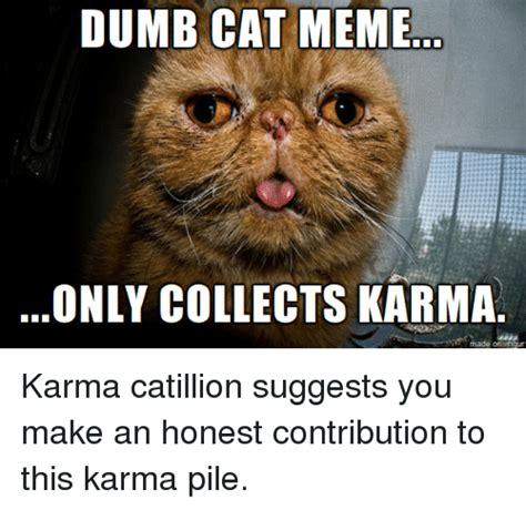 Funny Dumb Memes - dumb cat meme only collects karma made on ingur karma