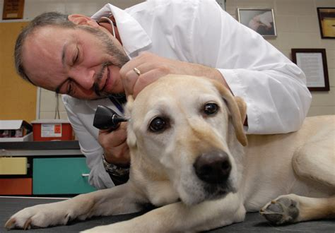 hearing aids for dogs ohmidog come again hearing aid is in the works ohmidog