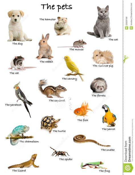 imagenes libres animales collage de animales dom 233 sticos y de animales en ingl 233 s