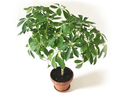name of common house plant common names of indoor plants pictures to pin on