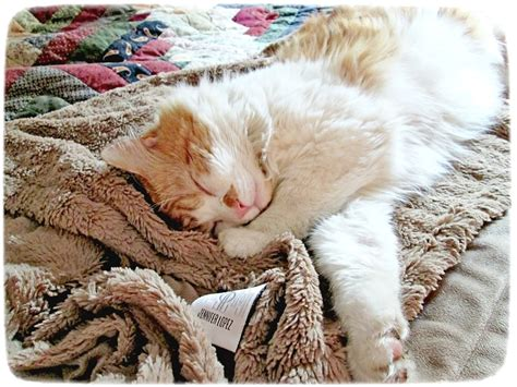 shelters in ct 25 adorable kittens for adoption in ct kittens wallpapers