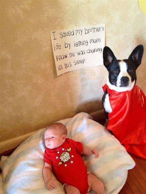 Jo In Pet Ear Hat S 25 best ideas about awesome dogs on pet