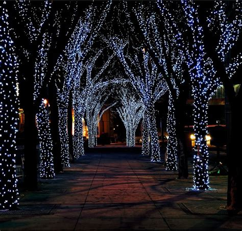 best lights for outdoor trees lights outside trees