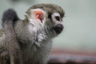 Wo Kann Baby Affen Kaufen 4725 by Hausaffen Kaufen Pflanzen F 252 R Nassen Boden