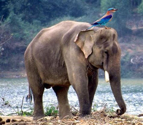 what is your indian state s animal and bird it no