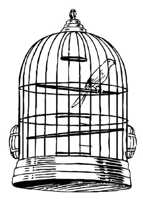 coloring pages of bird cages bird cage clip art cliparts co
