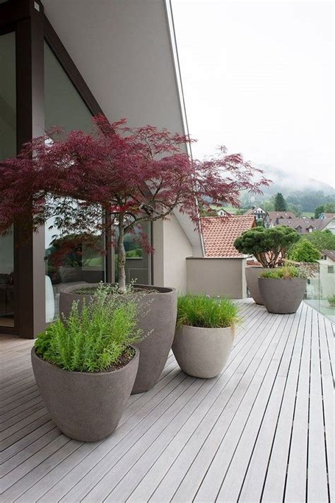 outdoor potted trees 25 best ideas about potted trees on trees in
