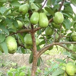 Best Online Fruit Tree Nursery - fruit tree garden plant pictures newhairstylesformen2014 com