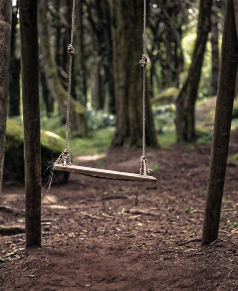 swing on tree tree swing free stock photo public domain pictures