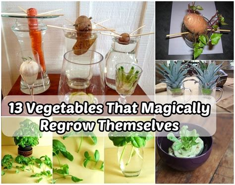 8 vegetables that regrow 13 vegetables that magically regrow themselves diy craft