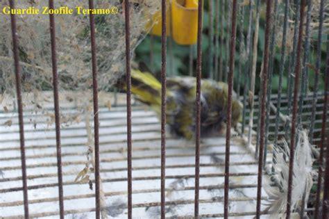 casa di cura privata le terrazze srl gabbia trappola uccelli 28 images 61519117 animali in