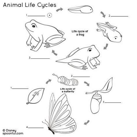 printable animal life cycles frog life cycle worksheets 2nd grade life cycle of a