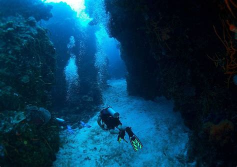 dive instructor diving instructor careers with dressel divers