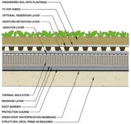 extensive green roof eco brooklyn