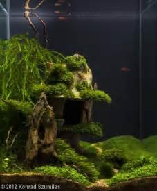 nano aquascapes aquascape nano aquarium sequa for