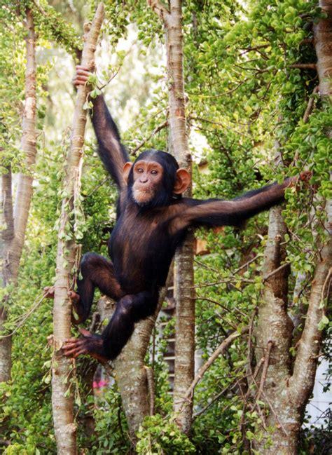 monkey swing glennys primates