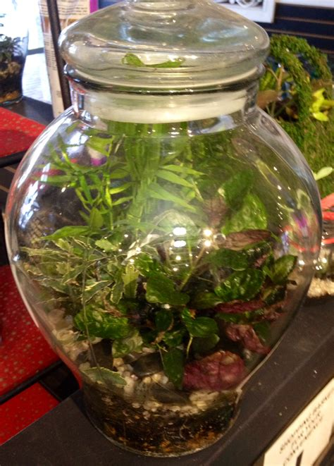 Garden Terrarium Make Your Own Terrariums And Gardens The Oak Leaf