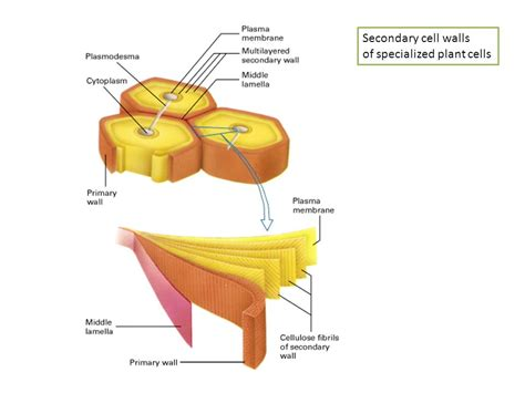 cells at work muscle cells nerve cells human blood