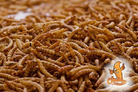 Glodok Lb By A D Bird 2 lbs dried mealworms for birds etc approx