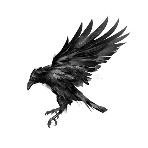 drawing a sketch of a flying black crow on a white