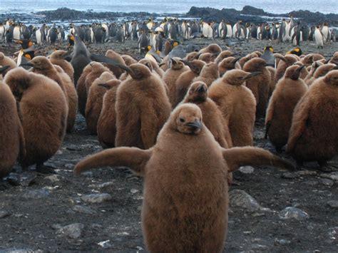 Wildlife — Australian Antarctic Division