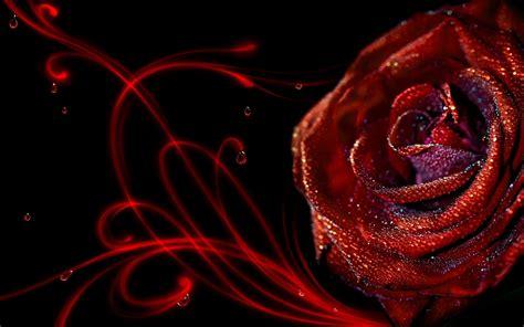 wallpaper 3d rose wallpaper hd 3d flower rose 3d flowers wallpaper