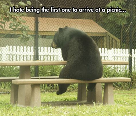 Bear At Picnic Table Meme - it s unbearable the meta picture