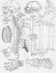 anatomy of a bone coloring anatomy coloring pages bestofcoloring