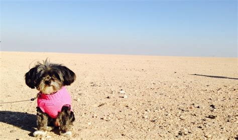 places that allow dogs 5 friendly places in kuwait