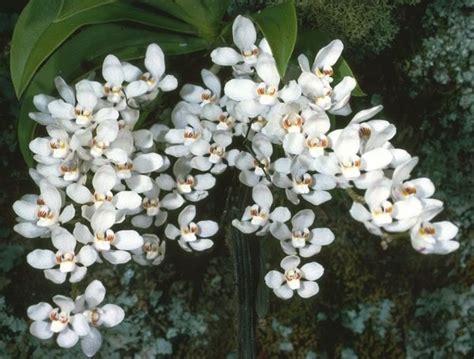 fiori di arancio composizioni floreali per matrimoni regalare fiori