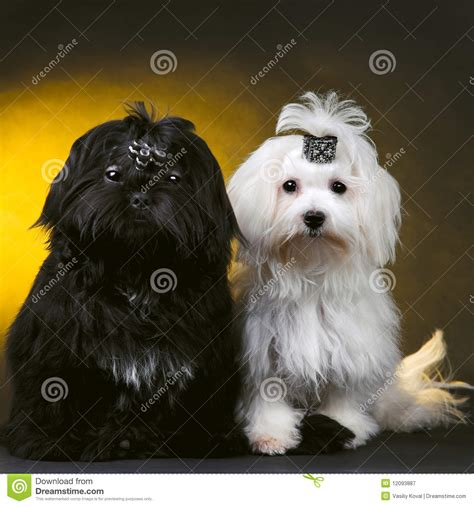 free small dogs small tiny dogs breeds picture