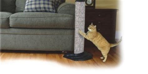 couch protectors for cats couch protector scratching poles
