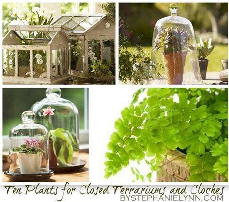 best plants for closed terrariums 1000 images about terrariums on terrarium plants for terrariums and terrarium plants