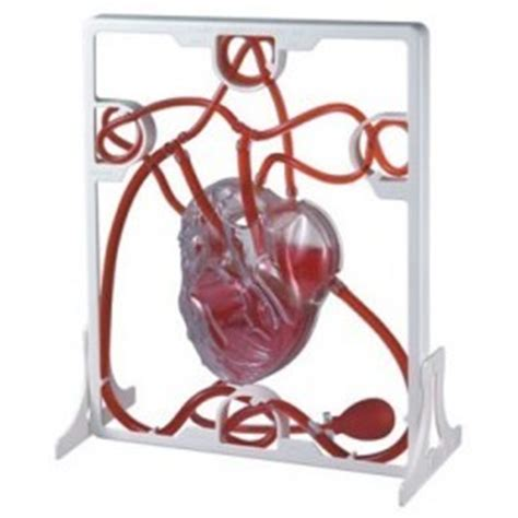 da pump corazon pumping heart model pumping heart model exporter