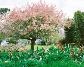 les arbres et les arbustes 224 fleurs pour votre jardin