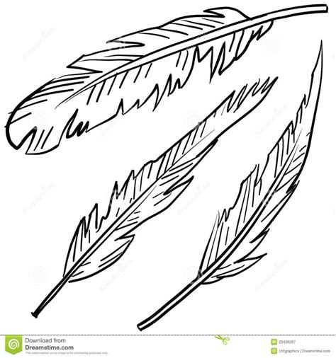 free coloring pages feathers to color colouring pages