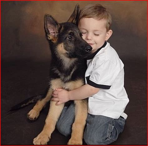 german shepherd puppies cleveland ohio german shepherd breeders cleveland ohio photo