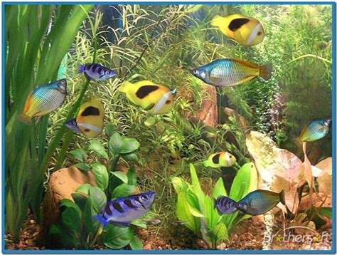 wallpaper aquarium mac best aquarium screensaver mac os x download free