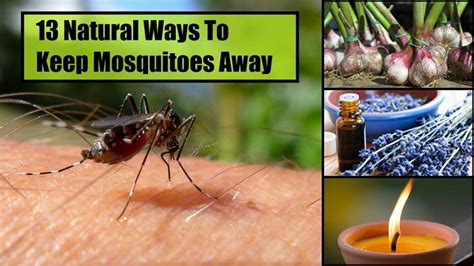 how to keep mosquitoes away in backyard dyi keep mosquitoes away diy projects pinterest