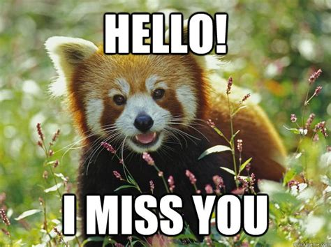Red Panda Meme - hello i miss you curious red panda quickmeme