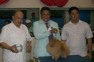 how much is pomeranian in philippines 12 philippine titles and top pomeranians in the philippines canton pomeranians