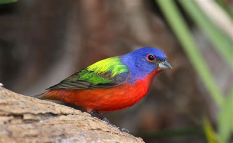 the problem with pretty birds by andrew furman terrain