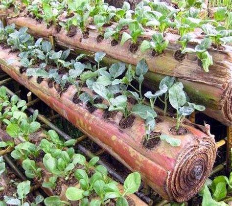 Pupuk Cair Em4 cara membuat pupuk organik cair sederhana rumah dan kebun
