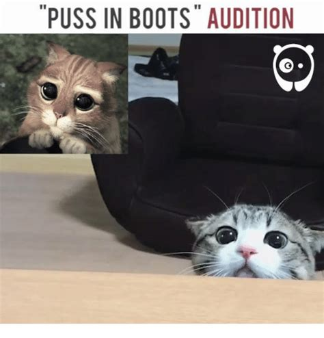Puss In Boots Meme - puss in boots audition meme on sizzle