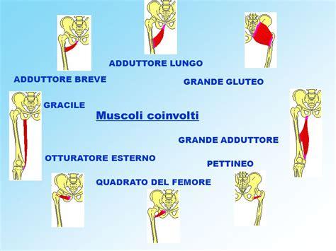 muscolo otturatore interno anatomia dell anca e biomeccanica dell articolazione coxo