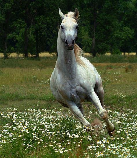 imagenes artisticas de caballos pintura moderna y fotograf 237 a art 237 stica caballos