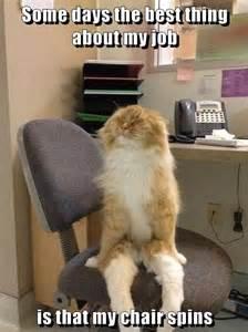 Cat Sitting Meme - cat memes hairballexpress