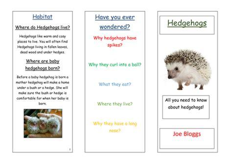 layout features ks2 hedgehog information leaflet by oliverharper teaching