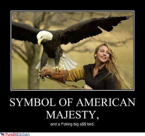 Funny Eagles Meme - bald eagle funny meme memes